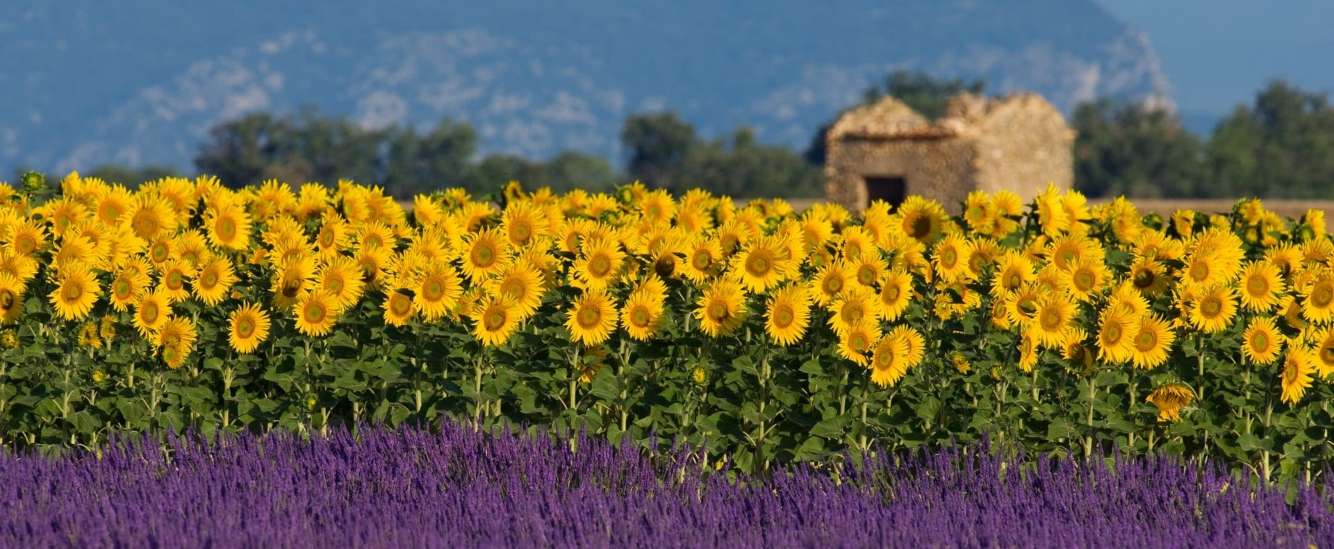Provence Gallery
