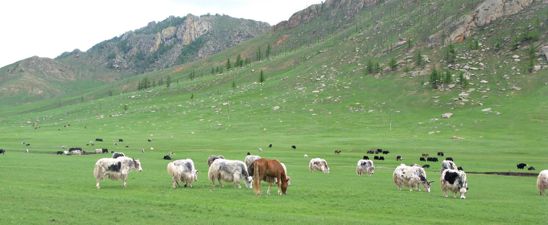 Gorkhi-Terelji National Park, Ulan Bator