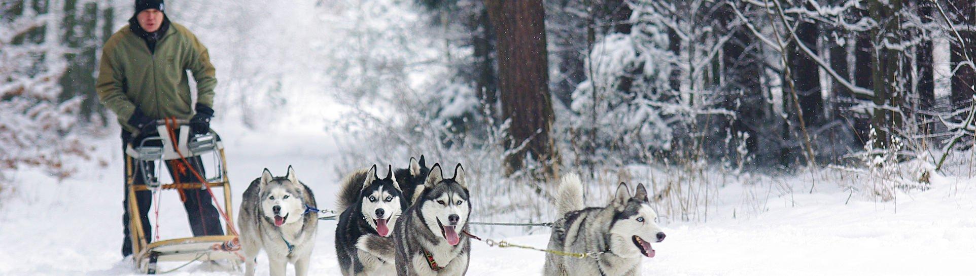 Winter Norway & Finland Tour