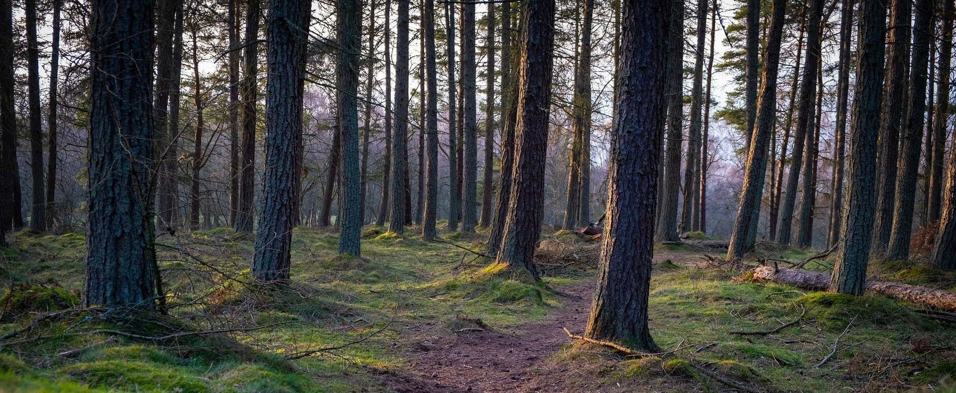 Perthshire Big Tree Country Experience Gallery