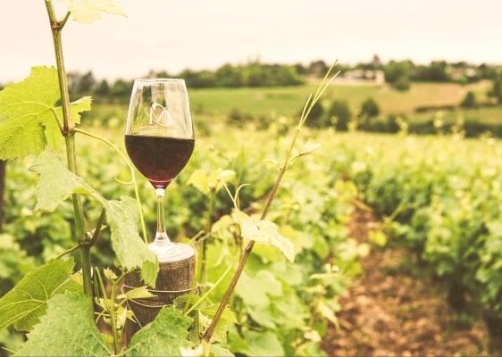 Loire Wine Tasting