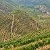 Douro Valley Day Trip