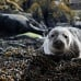 Mallaig Day Trip and Wildlife Cruise Experience Gallery