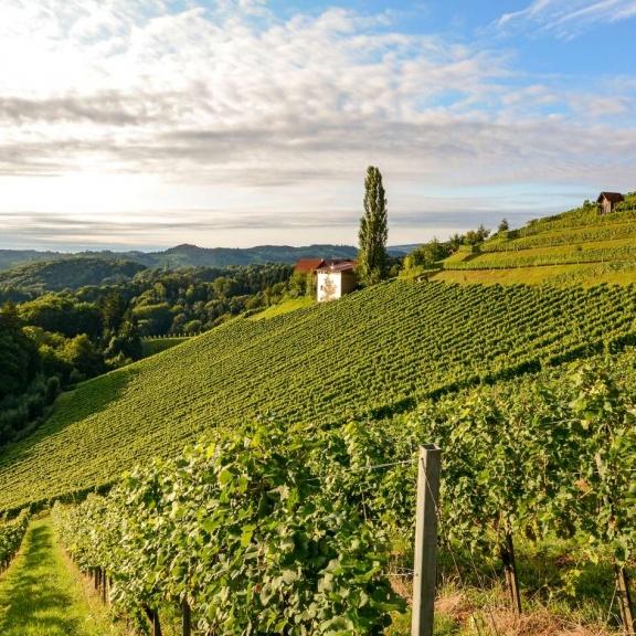 Italy Wine Tour