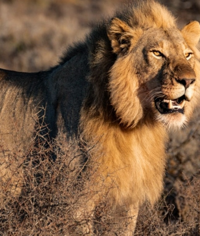 Wake Up In Africa: Exploring South Africa