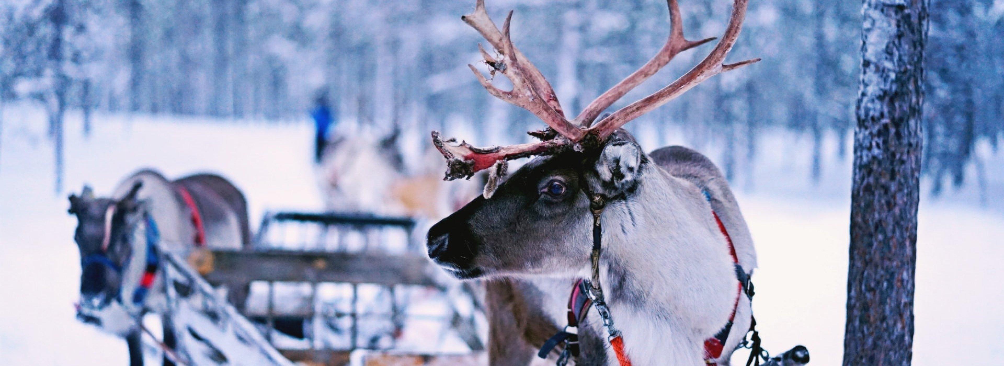 Lapland Region