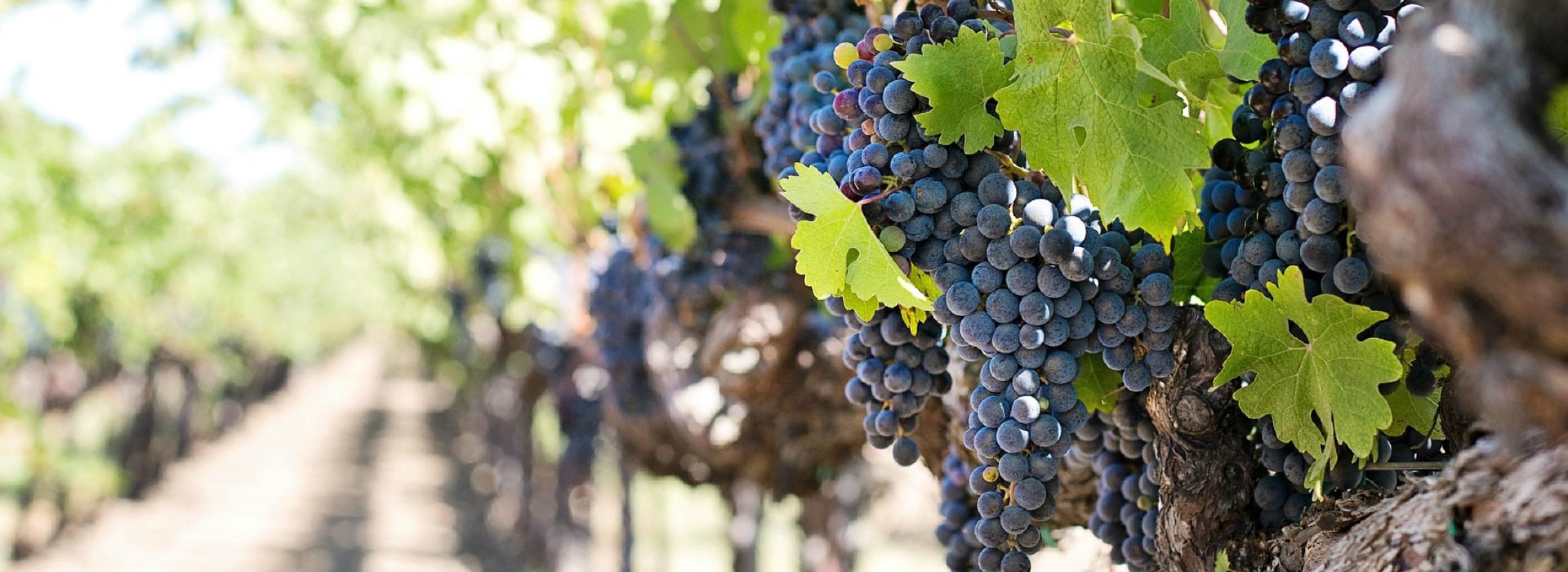 Moldova, winery